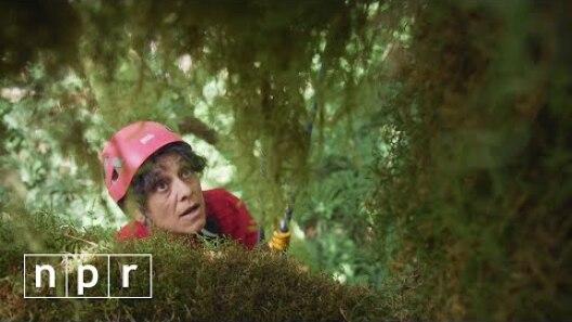 TreeTop Barbie and The Last Biotic Frontier